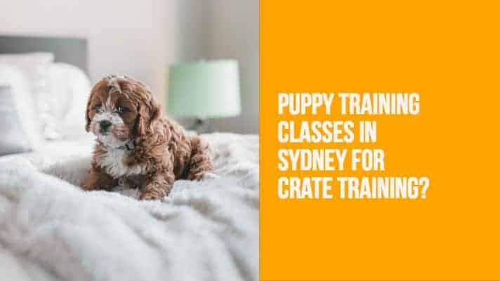 Puppy Training Classes in Sydney