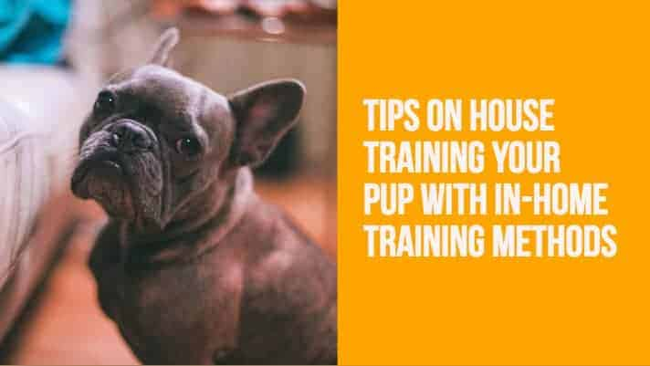 In-Home Training