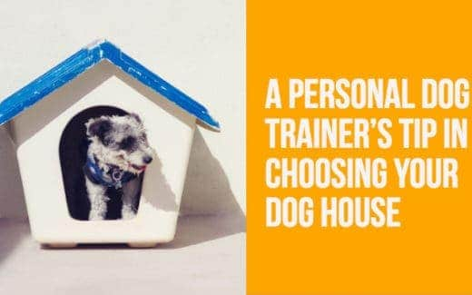 A Personal Dog Trainer's Tips for Choosing Your Dog House