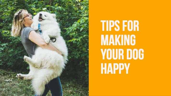 Tips for Making your dog happy